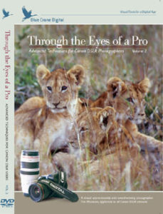 Canon V2 Through the Eyes of a Pro